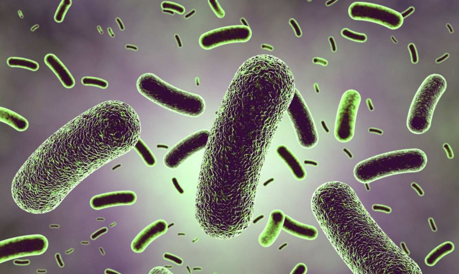 lactobacillus Rhamnosus probiotic-supplement
