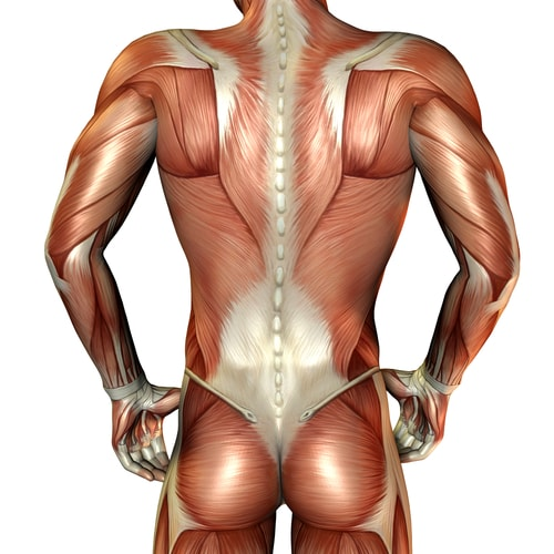 back pain upper back between shoulder blades treatment